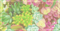 succulents. -f2u by kittoko
