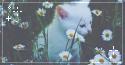 daisy kitten. -f2u by kittoko