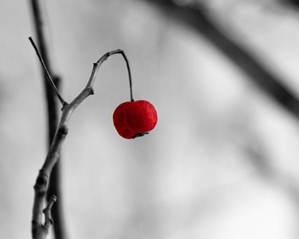 Winter Berry by Tjh1023