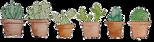 F2U | Cactus Plant Divider