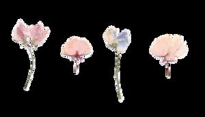F2U | Flower Divider 2 by UmieArt