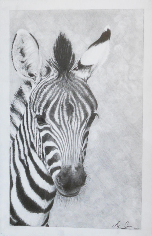 zebra pencil drawing - photo #23