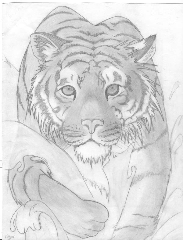 tiger by Preciousness