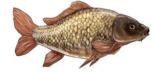 Carp carp