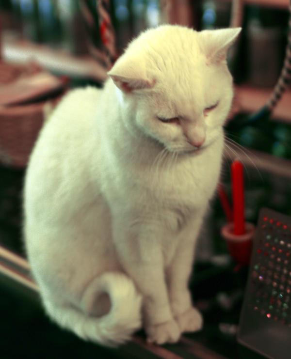 White cat by skipsstock