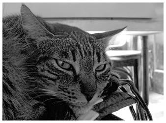 Wild Cat I by kujaku