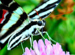 Cropped Butterfly