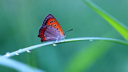 Butterfly by efabo