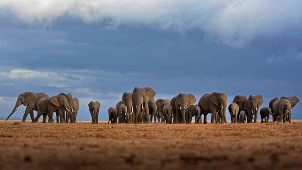 Elephant by efabo