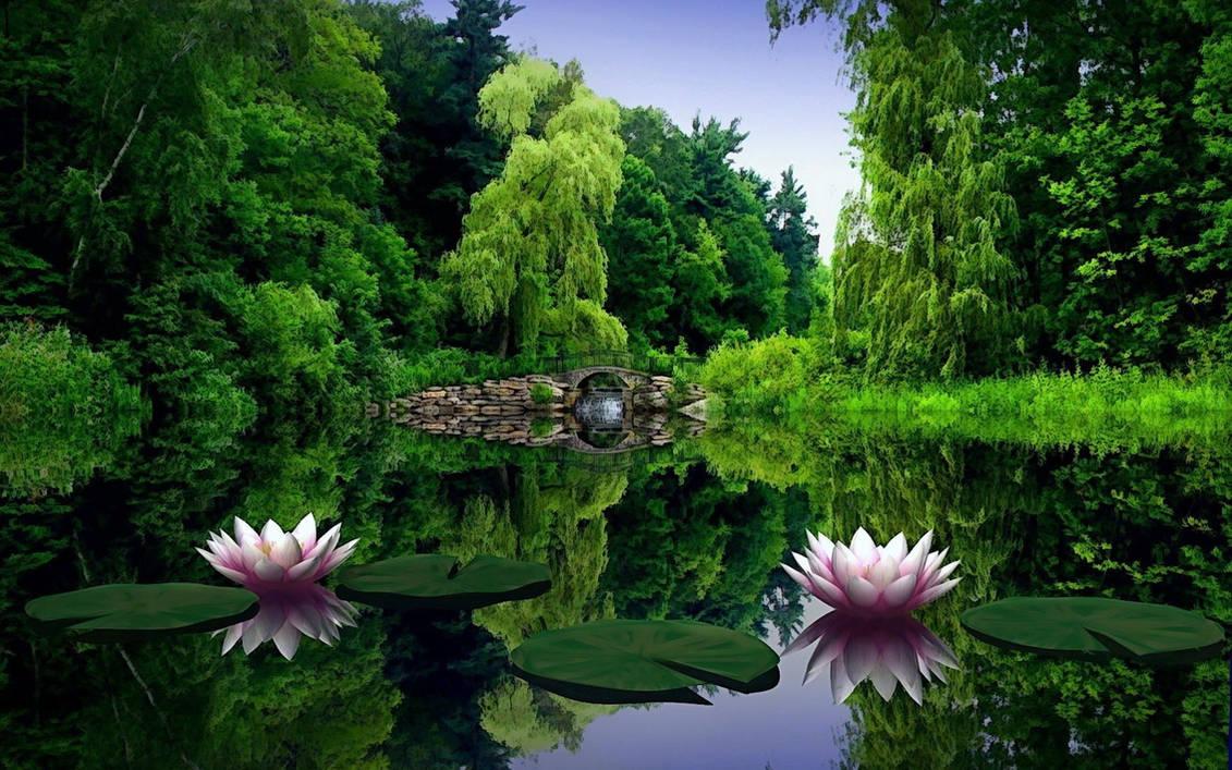 Обои Красивые Живые Природа Бесплатно