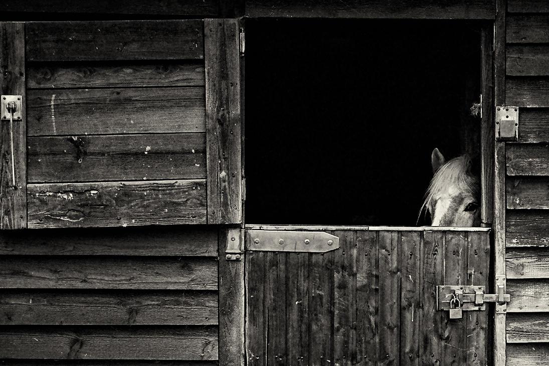 Looking by FlorianHebel
