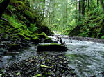 oregon creek 7