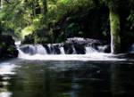 oregon creek 10