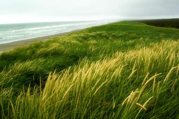 Oregon Beach 1 by Alegion-stock