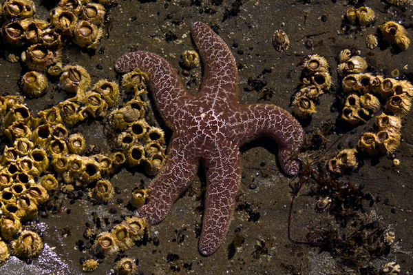 Starfish 3 by ~Alegion-stock