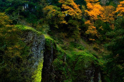 Autumn Colors Stock