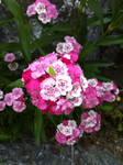 Flowers by Flashpelt1