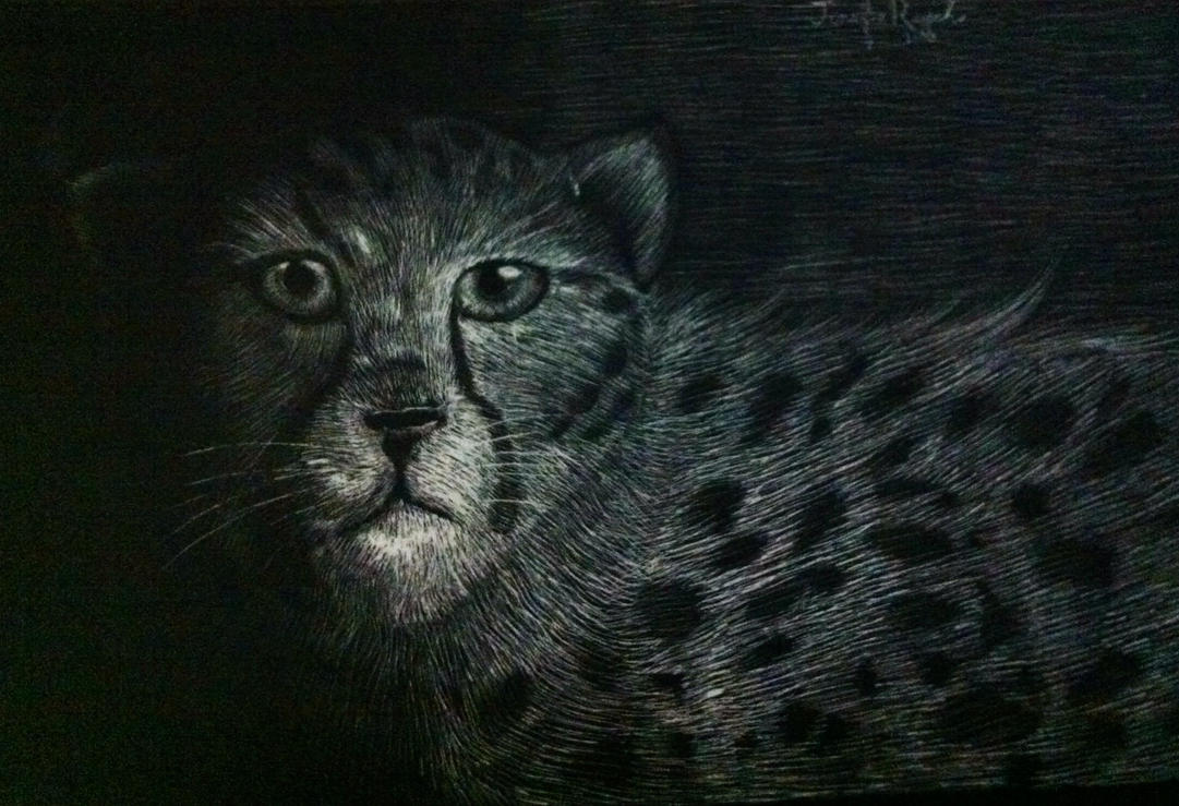 Scratch Board Cheetah by Flashpelt1