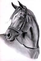 Arabian Horse by ManiaAdun