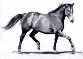 Horse Gait: Trot by ManiaAdun