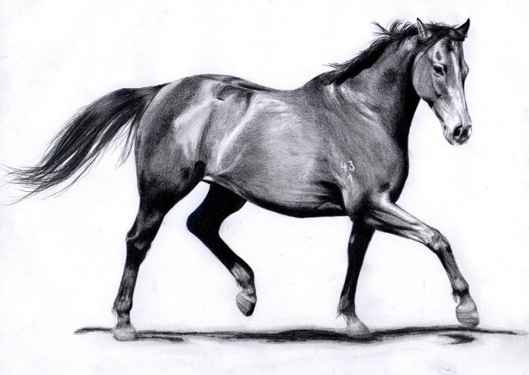 Horse Gait: Trot by ManiaAdun on DeviantArt