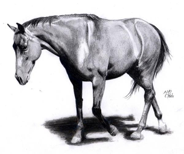 Horse Gait: Walk by ManiaAdun