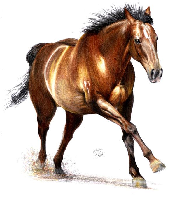 Horse Movement by ManiaAdun