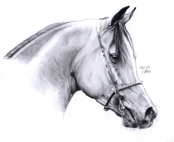 Arabian horse head by ManiaAdun on DeviantArt