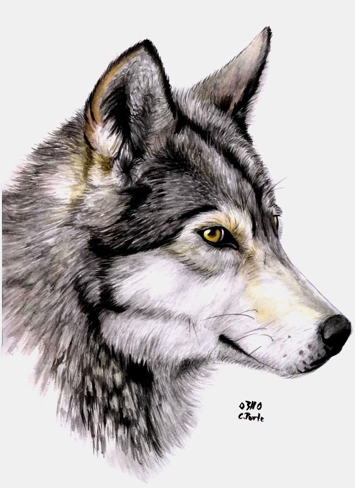 Watercolor wolf by ManiaAdun on DeviantArt