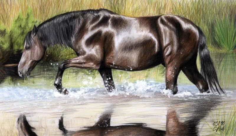 Water Horse by ManiaAdun on DeviantArt