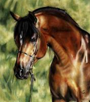 Arabian Horse II by ManiaAdun