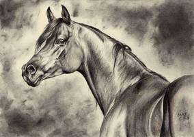 Arabian horse III by ManiaAdun