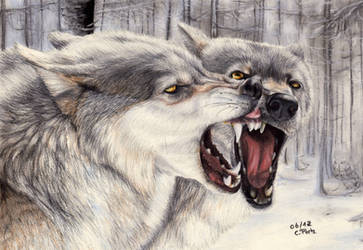 Wolves by ManiaAdun