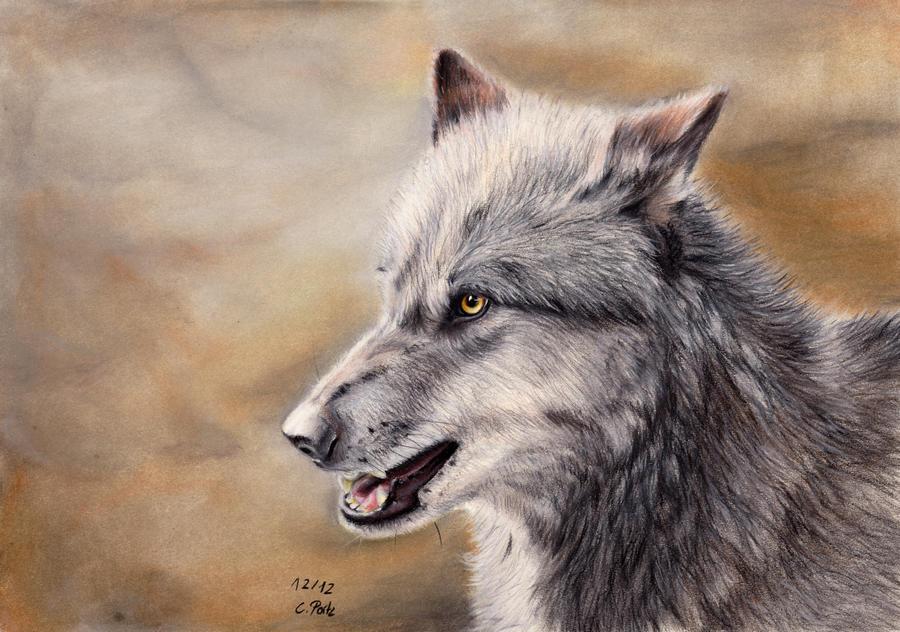 Wolf Reupload by ManiaAdun