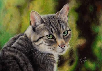 Cat by ManiaAdun