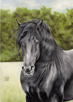 Friesian Horse 5 by ManiaAdun