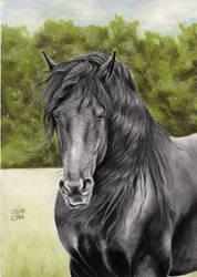 Friesian Horse 5