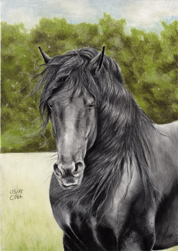 Friesian Horse 5 by ManiaAdun