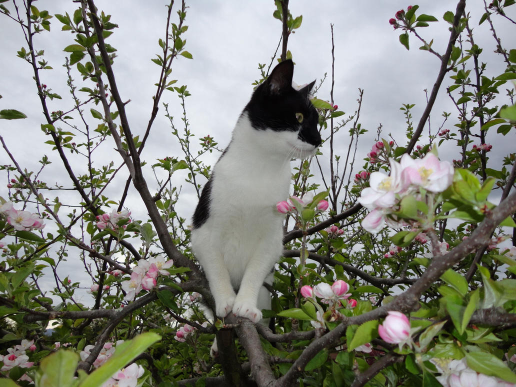 Cat up a tree stock 1 by GlitterKitten83