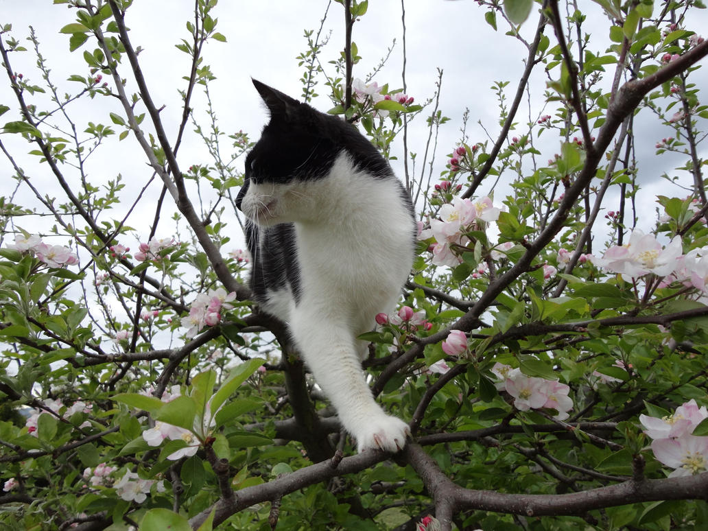 Cat up a tree stock 2 by GlitterKitten83