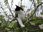 Cat up a tree stock 2