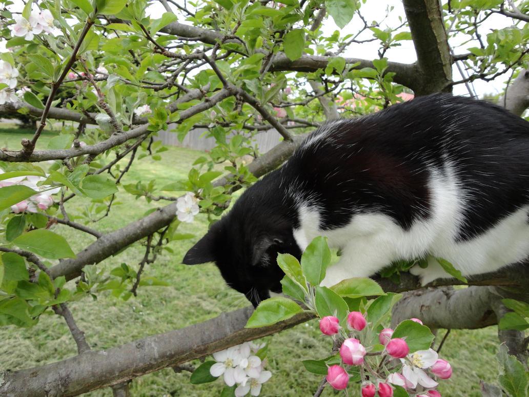 Cat up a tree stock 3 by GlitterKitten83