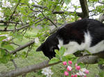 Cat up a tree stock 3