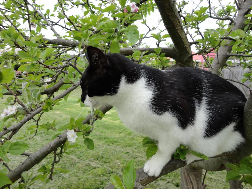 Cat up a tree stock 4 by GlitterKitten83
