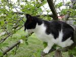 Cat up a tree stock 4