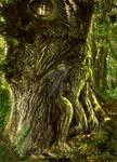Oak Father