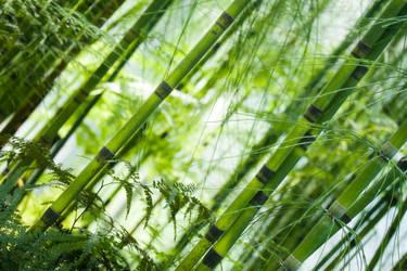 green II by stachelpferdchen