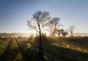 in the morning VI by stachelpferdchen