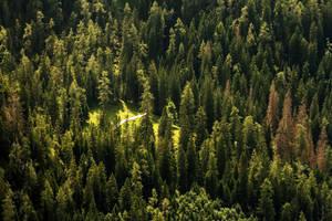 the path in the woods by stachelpferdchen