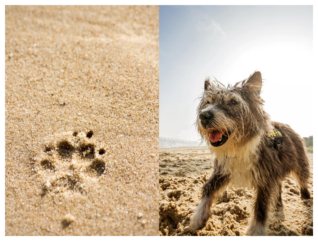 the beach dog by stachelpferdchen